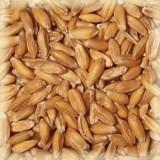 Солод Спелт (пшеничный), (Chateau Spelt)