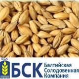 Солод  Пилсен А ячменный светлый  БСК
